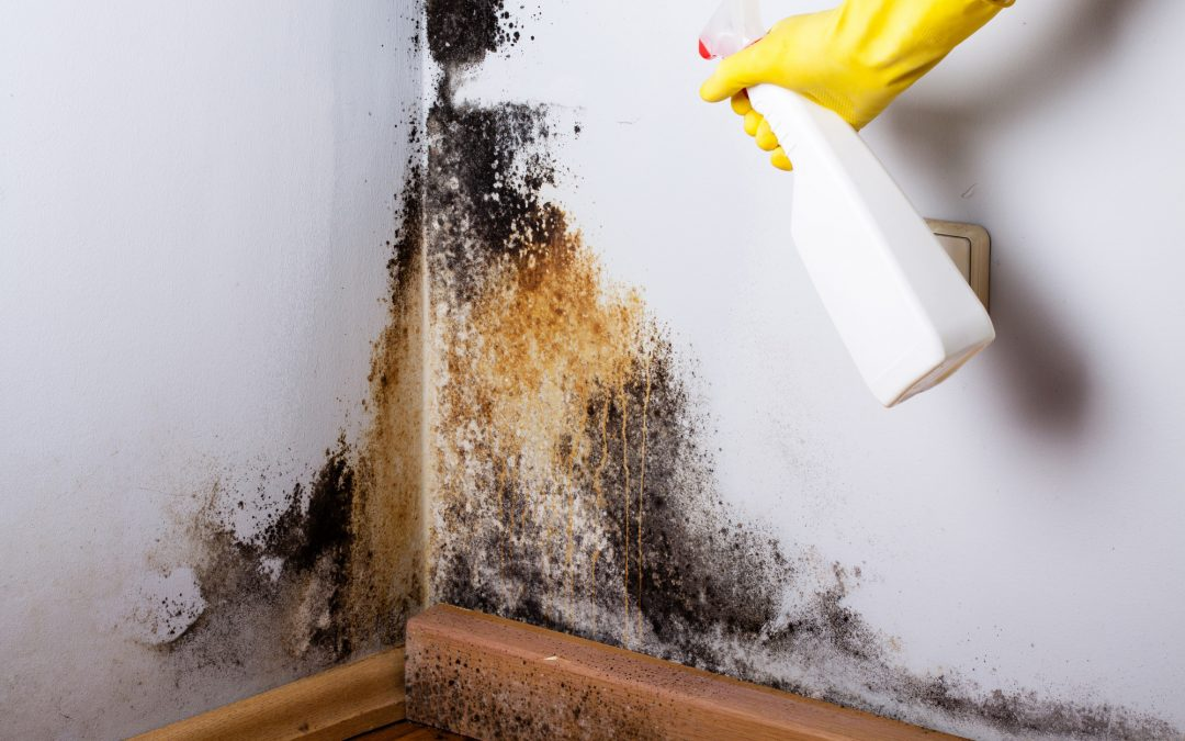 How to Clean Mold and Mildew Off Walls Before a Home Inspection