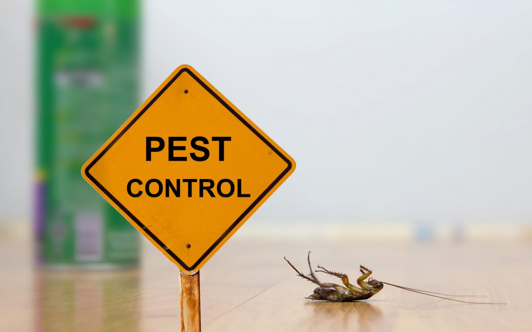 Pesky Pests! How to Check Your Home for an Insect Infestation