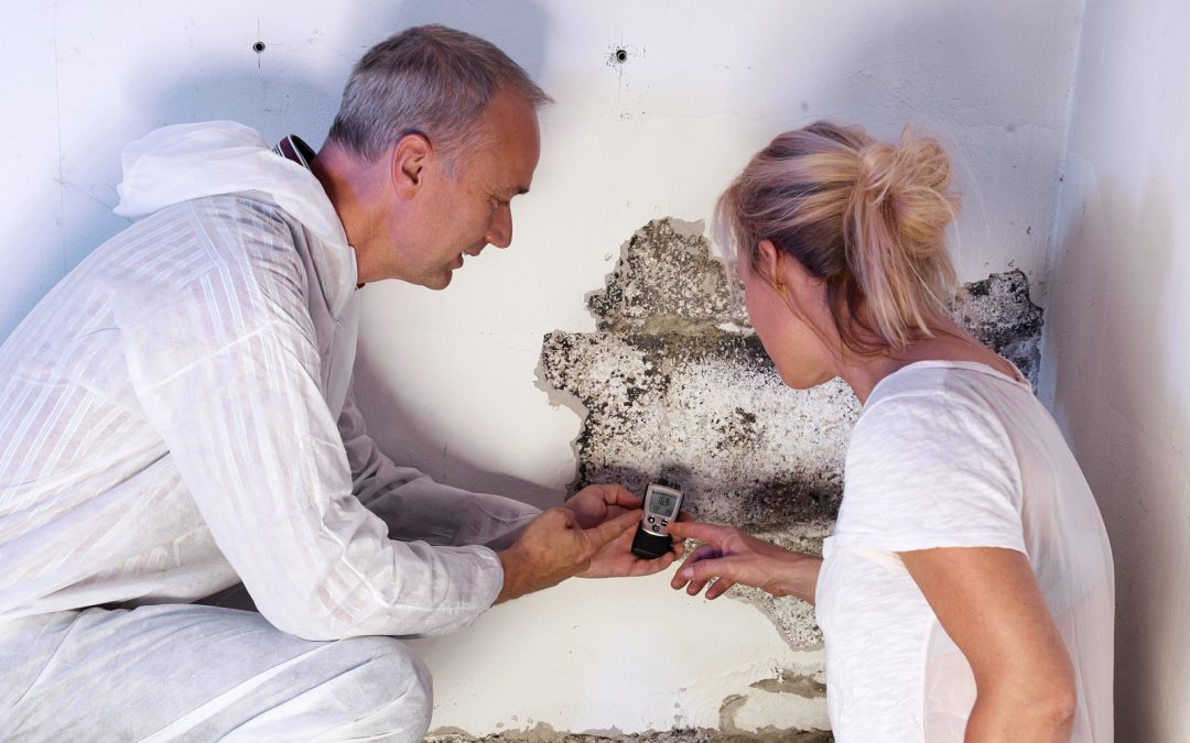 Here's How Basement Mold Can Affect Property Value