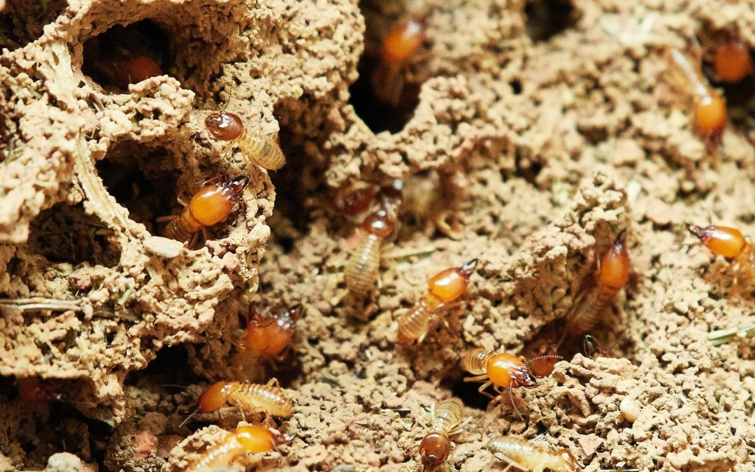 7 Signs of Termites That Your Home Inspector Will Look Out For